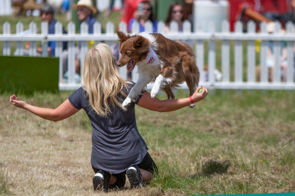 DogFest - Lucy Heath