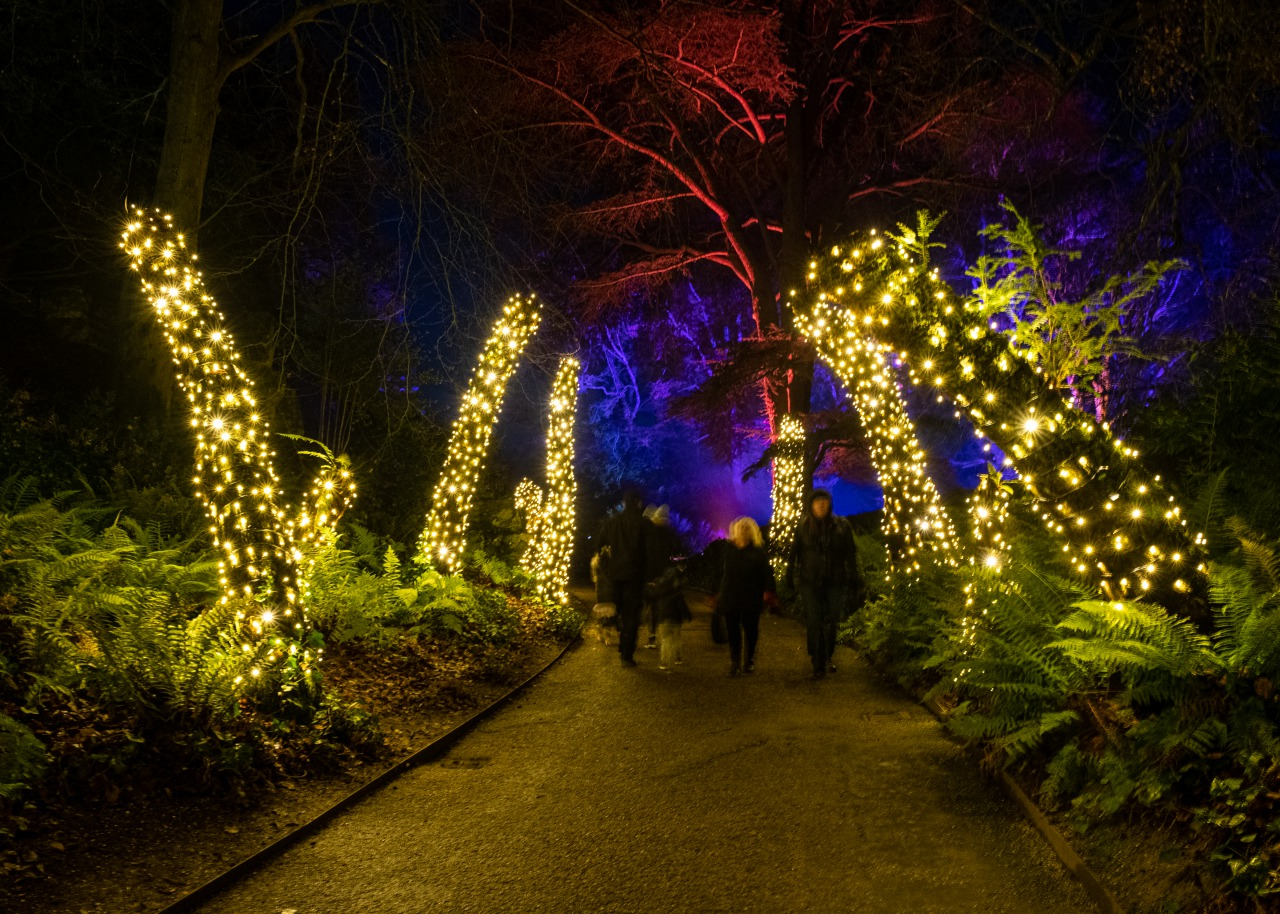 Winter Light Trail at Christmas at Waddesdon